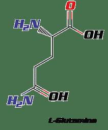 l-glutamine molecule